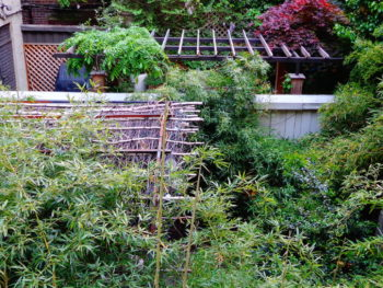 Neighboring Gardens with Bamboo and Trellises